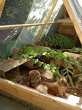 pyramid for rabbits and rodents